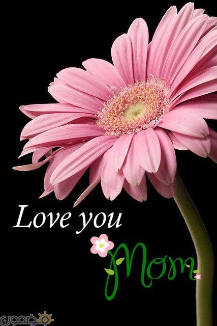 أحبك أمي 8 اجمل صور بوستات عيد الأم للفيس