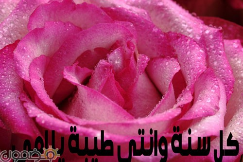 امي 1 وردة لست الحبايب صور عيد الام