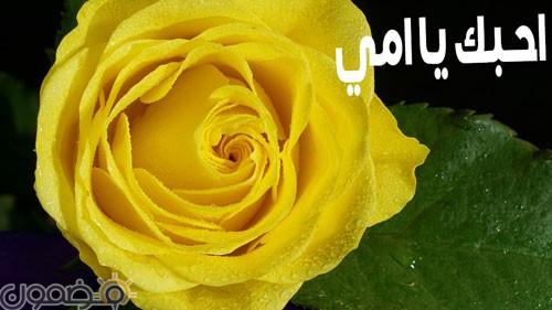 امي 2 وردة لست الحبايب صور عيد الام