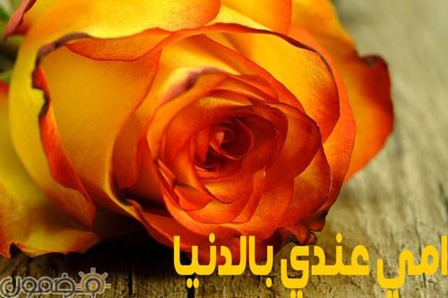 امي 3 وردة لست الحبايب صور عيد الام
