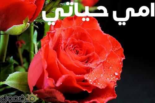 امي 4 وردة لست الحبايب صور عيد الام