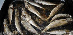 تحضير سمك بالفرن 300x143 عمل سمك السالمون فى الفرن بطريقة سهلة