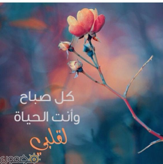 رسائل حب طويله رسائل حب وغرام قصيرة 2018
