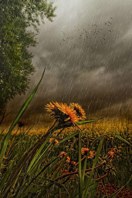 صور أمطار خلفيات صور مطر فصل الشتاء رومانسية جميلة للفيس بوك