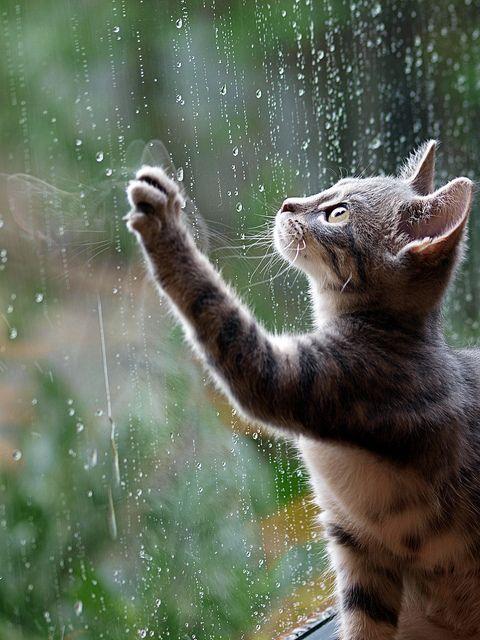صور أمطار قطة صور مطر فصل الشتاء رومانسية جميلة للفيس بوك