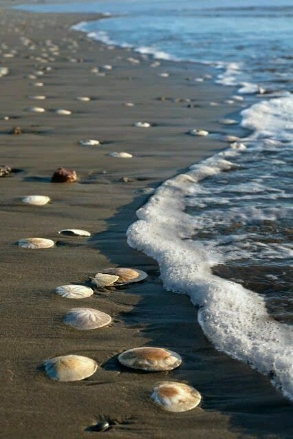 صور بحر واصداف صور البحر اروع خلفيات طبيعية خلابة