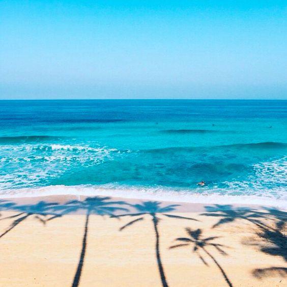 صور بحر ونخيل صور البحر اروع خلفيات طبيعية خلابة