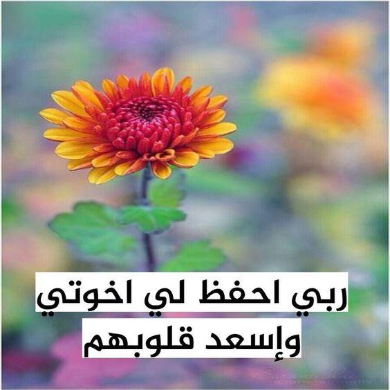 صور بوستات فيس بوك للاخوة صور بوستات فيس بوك منوعة جميلة نايس