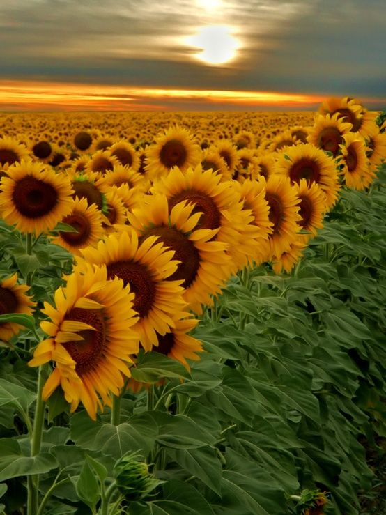 صور جميلة زهور صور جميلة جدا خلفيات كمبيوتر و للجوال