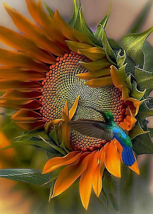 صور حلوة جميله 2 صور حلوة جدا خلفيات كيوت فيس بوك