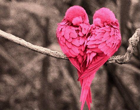صور حلوة حب صور حلوة جدا خلفيات كيوت فيس بوك