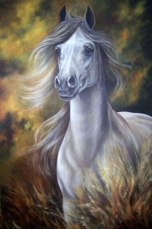 صور حلوة حصان 2 صور حلوة جدا خلفيات كيوت فيس بوك
