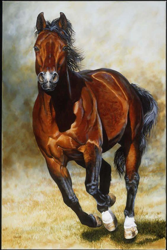 صور حلوة حصان صور حلوة جدا خلفيات كيوت فيس بوك
