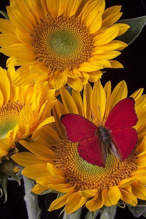 صور حلوة زهور صور حلوة جدا خلفيات كيوت فيس بوك