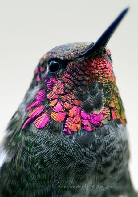 صور حلوة طائر صور حلوة جدا خلفيات كيوت فيس بوك