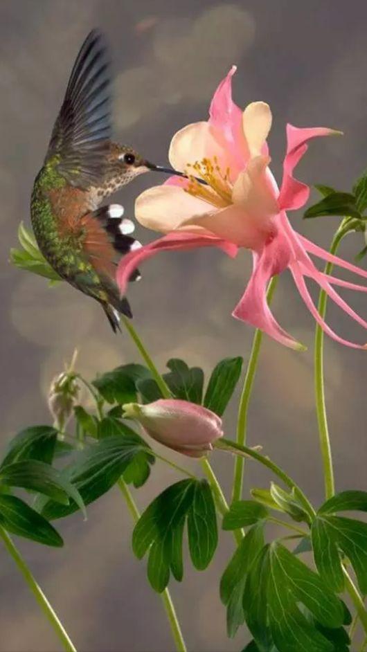 صور حلوة طبيعية 2 صور حلوة جدا خلفيات كيوت فيس بوك