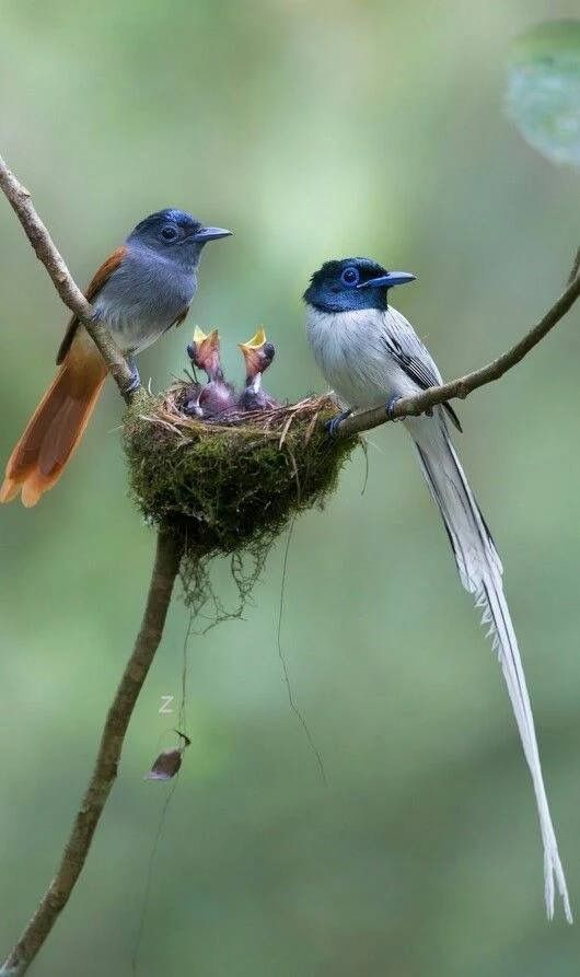 صور حلوة طيور صور حلوة جدا خلفيات كيوت فيس بوك