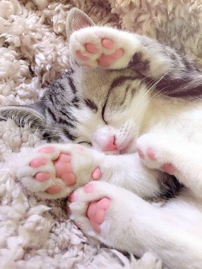 صور حلوة قطة 2 صور حلوة جدا خلفيات كيوت فيس بوك