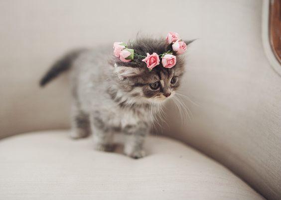 صور حلوة قطة صور حلوة جدا خلفيات كيوت فيس بوك