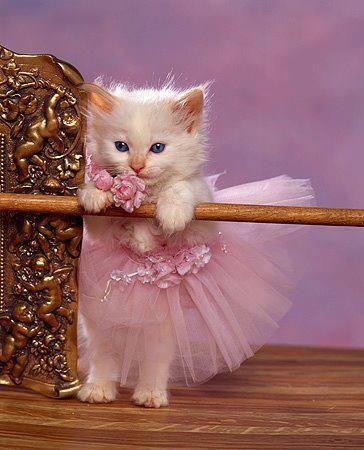 صور حلوة قطط كيوت صور حلوة جدا خلفيات كيوت فيس بوك