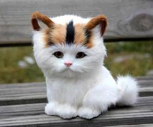صور حلوة قطط صور حلوة جدا خلفيات كيوت فيس بوك