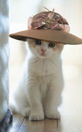 صور حلوة قطه صور حلوة جدا خلفيات كيوت فيس بوك
