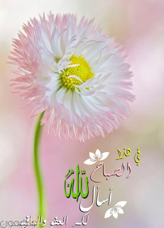 صور صباح الخير قلب 3 صور صباح الخير حبيبي قلب رومانسية
