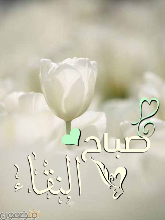 صور صباح الخير قلب 4 صور صباح الخير حبيبي قلب رومانسية