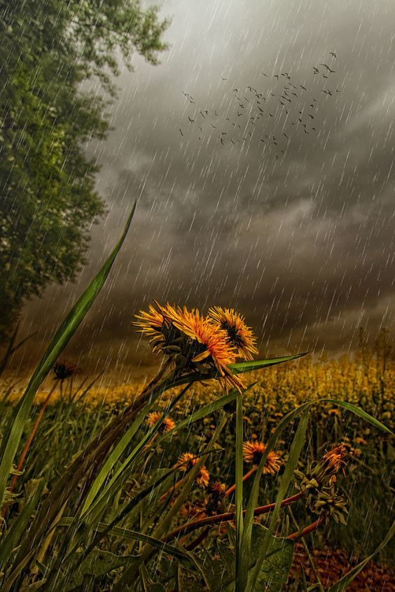 صور مطر جميلة صور مطر فصل الشتاء رومانسية جميلة للفيس بوك