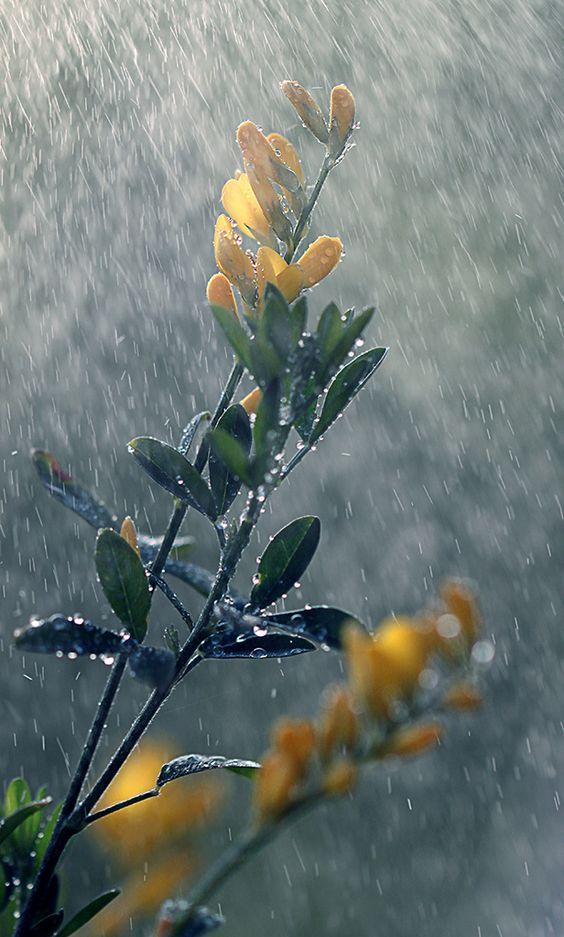 صور مطر حلوة جدا صور مطر فصل الشتاء رومانسية جميلة للفيس بوك