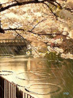صور مطر حلوة صور مطر فصل الشتاء رومانسية جميلة للفيس بوك