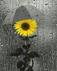 صور مطر دوار الشمس صور مطر فصل الشتاء رومانسية جميلة للفيس بوك