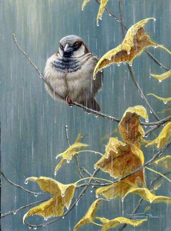 صور مطر روعه صور مطر فصل الشتاء رومانسية جميلة للفيس بوك