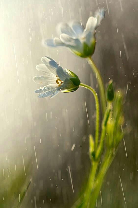 صور مطر رومانسي صور مطر فصل الشتاء رومانسية جميلة للفيس بوك