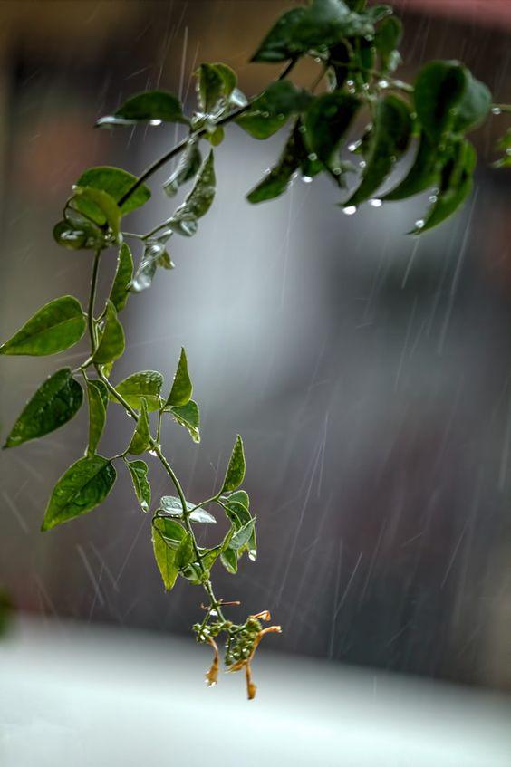 صور مطر شجر صور مطر فصل الشتاء رومانسية جميلة للفيس بوك