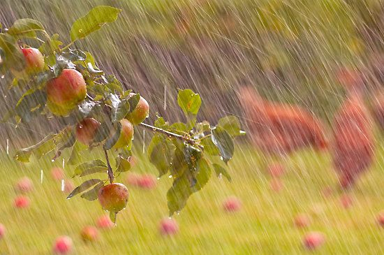 صور مطر طبيعة صور مطر فصل الشتاء رومانسية جميلة للفيس بوك