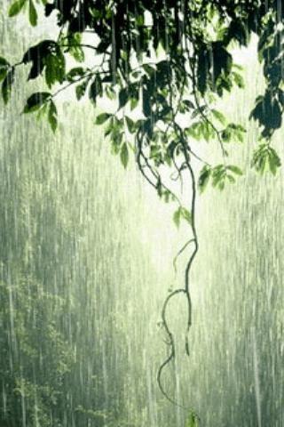 صور مطر طبيعي صور مطر فصل الشتاء رومانسية جميلة للفيس بوك
