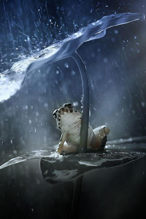 صور مطر مضحك صور مطر فصل الشتاء رومانسية جميلة للفيس بوك