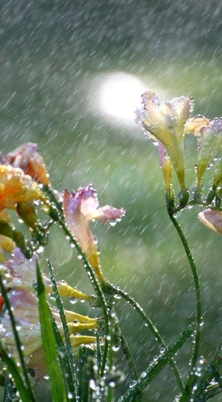 صور مطر ورد صور مطر فصل الشتاء رومانسية جميلة للفيس بوك