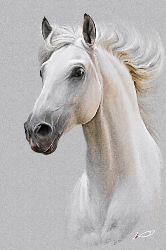 صور مناظر طبيعية خيول صور مناظر طبيعية خلفيات كمبيوتر وجوالات رائعة