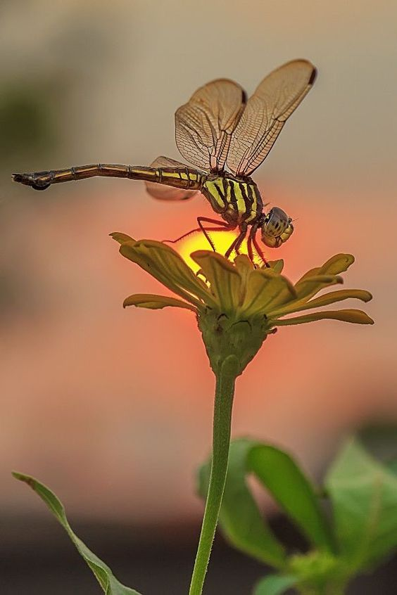 صور مناظر طبيعية زهرة صور مناظر طبيعية خلفيات كمبيوتر وجوالات رائعة