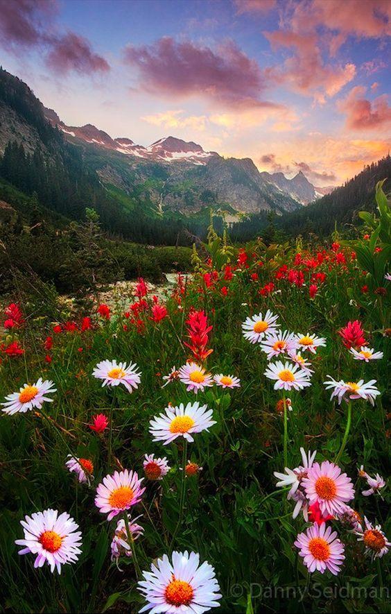صور مناظر طبيعية زهور صور مناظر طبيعية خلفيات كمبيوتر وجوالات رائعة