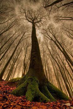 صور مناظر طبيعية شجر صور مناظر طبيعية خلفيات كمبيوتر وجوالات رائعة