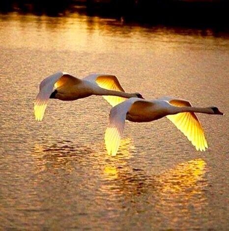صور مناظر طبيعية طيور 2 صور مناظر طبيعية خلفيات كمبيوتر وجوالات رائعة