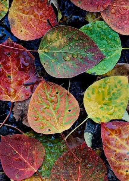 صور مناظر طبيعية ورق شجر صور مناظر طبيعية خلفيات كمبيوتر وجوالات رائعة