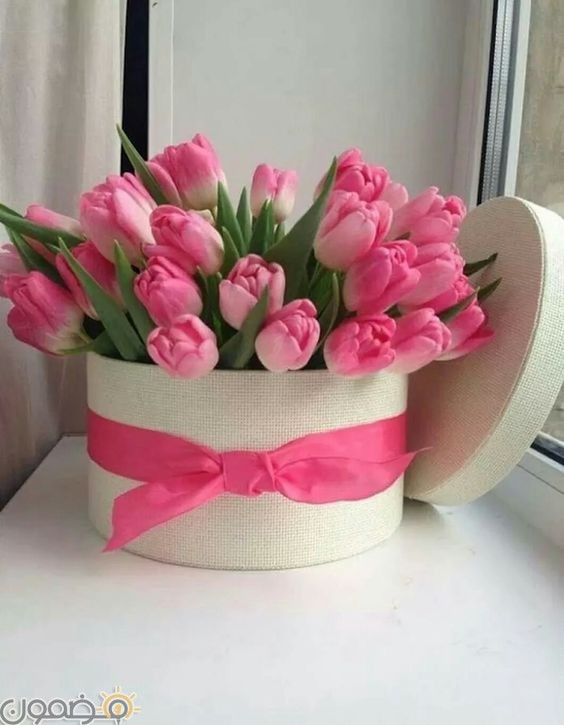 صور ورد الجوري 10 صور ورد الجوري الوردي فيس بوك