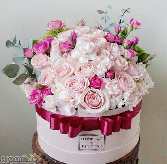 صور ورد الجوري 11 صور ورد الجوري الوردي فيس بوك