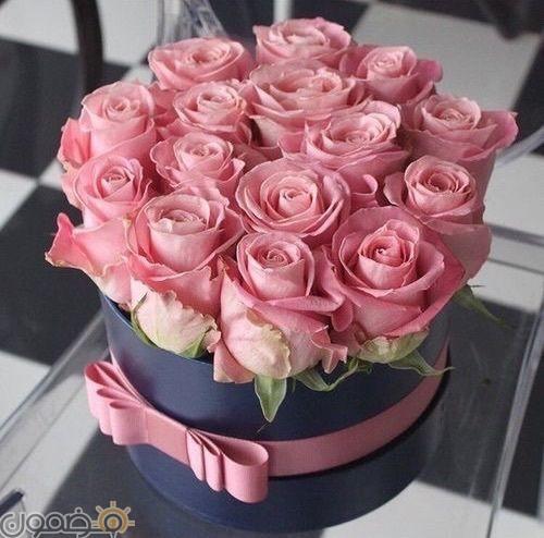 صور ورد الجوري 4 صور ورد الجوري الوردي فيس بوك
