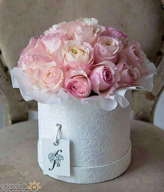 صور ورد الجوري 5 صور ورد الجوري الوردي فيس بوك