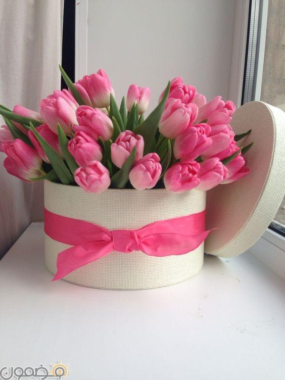 صور ورد الجوري 6 صور ورد الجوري الوردي فيس بوك